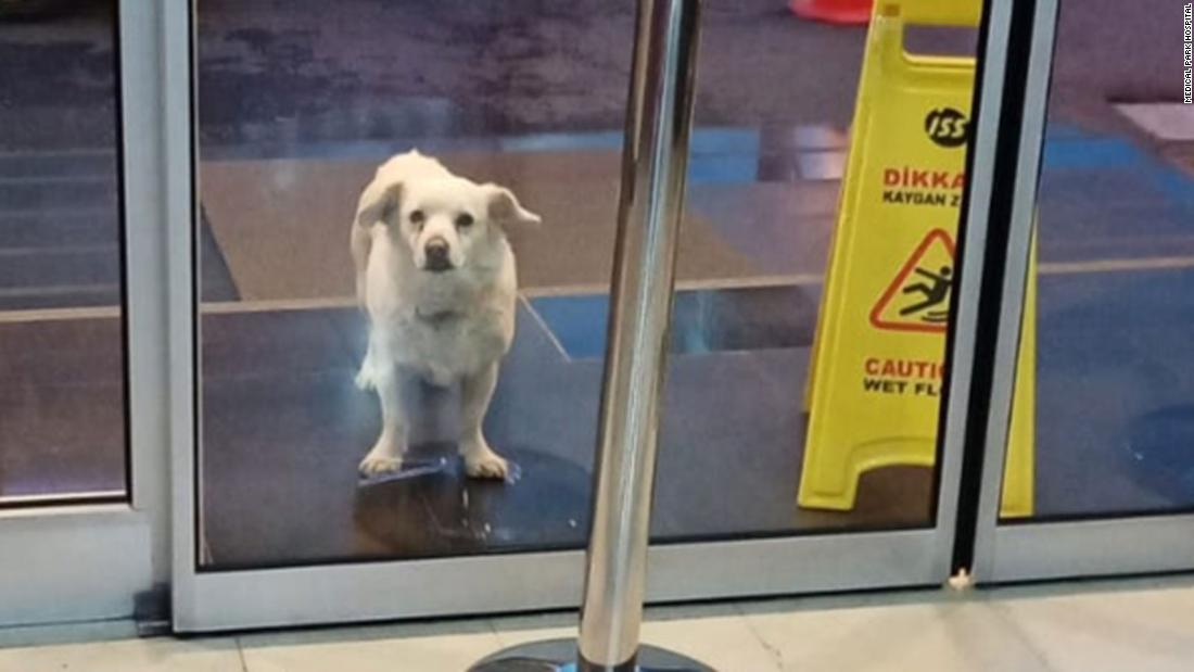 Wafa dog waits for its owner six days outside the hospital