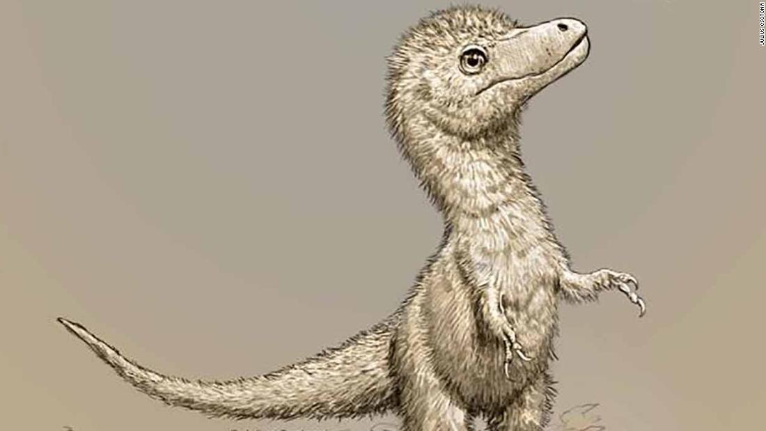 A new study shows that young tyrannosaurs were about the size of a dog