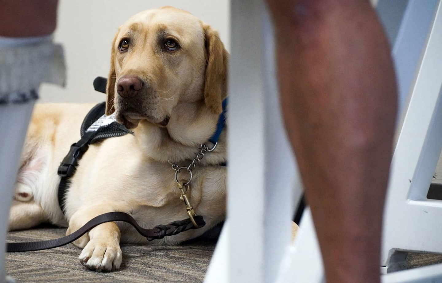 Emotional support animals will no longer be allowed in, airlines warn