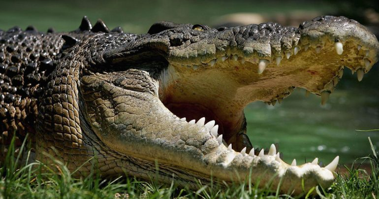 Fishermen rescue a naked fugitive from crocodile-infested waters in Australia